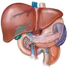CMO disintossicazione fegato