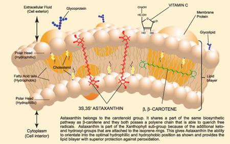 astaxantina naturale