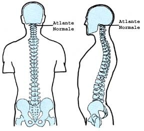 atlante osteopatia 5