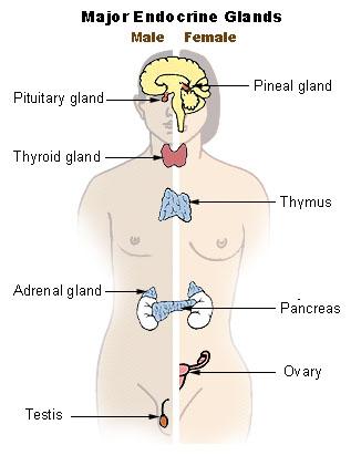 candida sistema ormonale