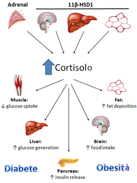 how to bring cortisol levels down