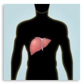 disintossicazione fegato