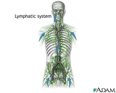 disintossicazione sistema linfatico