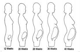 gravidanza osteopatia postura
