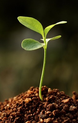 naturopatia terreno matrix