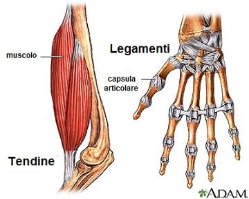 osteopatia legamenti tendini