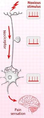 osteopatia nocicettori dolore