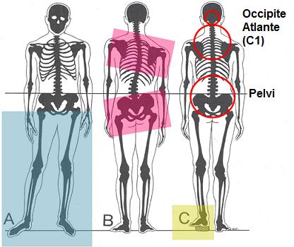osteopatia postura dolore 1