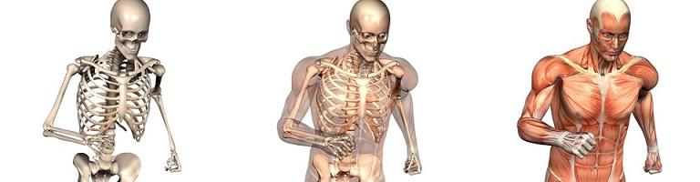 osteopatia principi