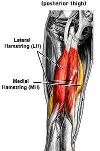 osteopatia trauma hamstring