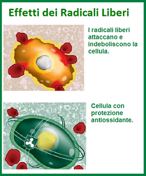 radicali liberi antiossidante