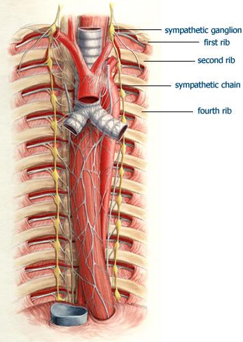 sistema simpatico osteopatia