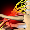 stretto toracico osteopatia