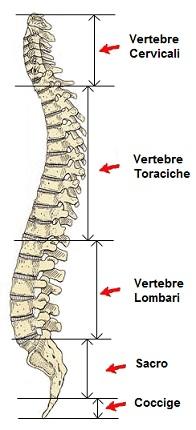 vertebre rachide