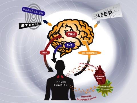 adattogeni stress