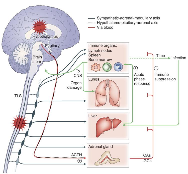 fisiologia stress adattogeni