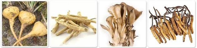 piante funghi adattogeni
