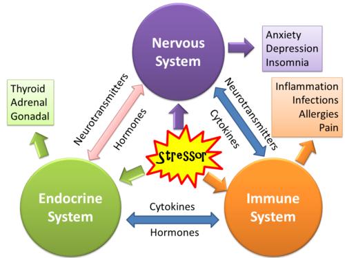 stress interazione mente corpo