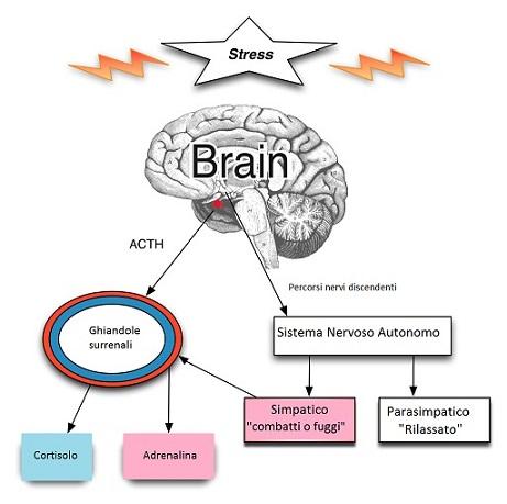 stress stressor adattogeni