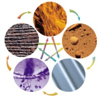cinque elementi medicina cinese