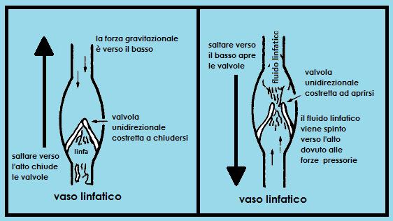 trampolino sistema linfatico