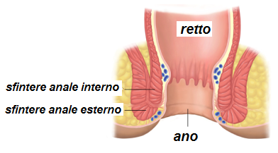 canale ano-rettale