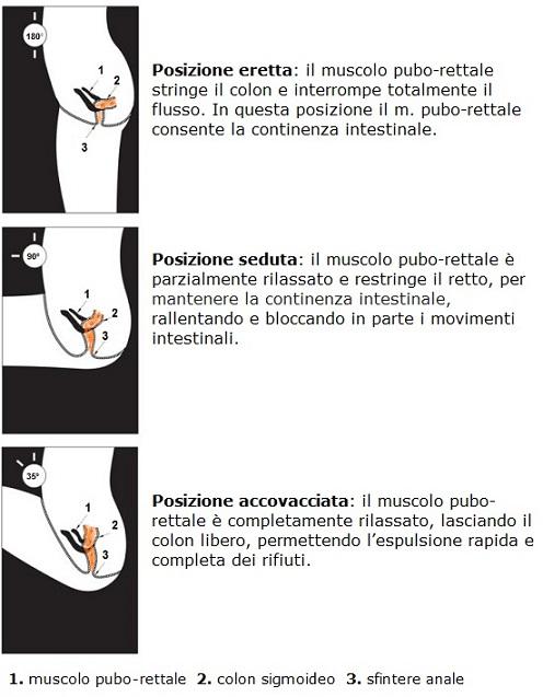 posizione pubo-rettale water