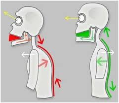 disturbo dell'ATM, malocclusione, bruxismo tutti questi disturbi potrebbero riconducurre ad un problema posturale